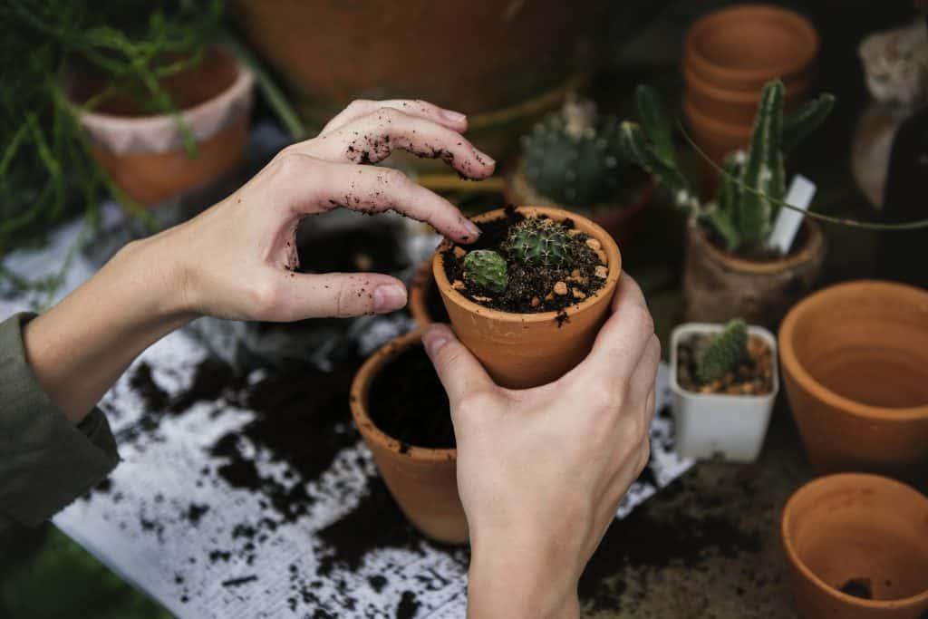 donna che lavora con le piante
