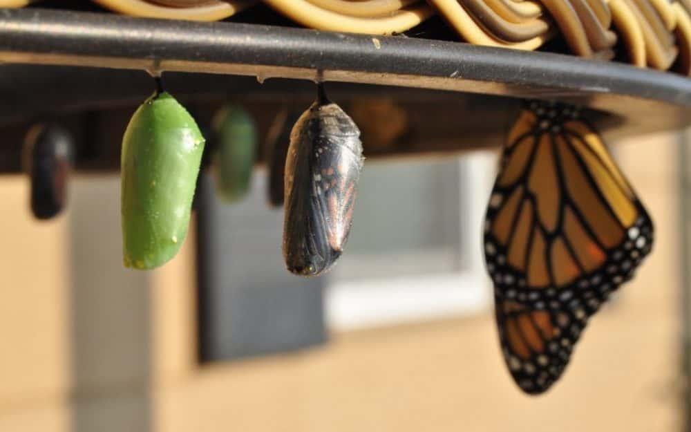 trasformazione in farfalla