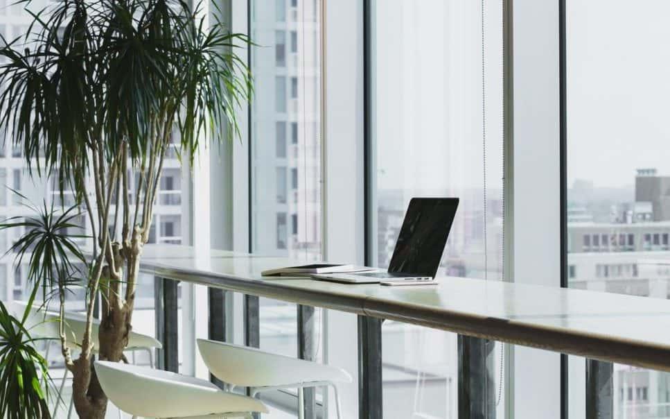 ufficio con palma