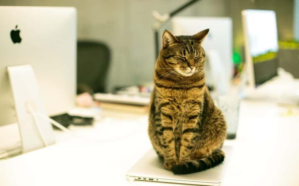 Ufficio pet-friendly: più produttivi e soddisfatti con gli amici a quattro zampe