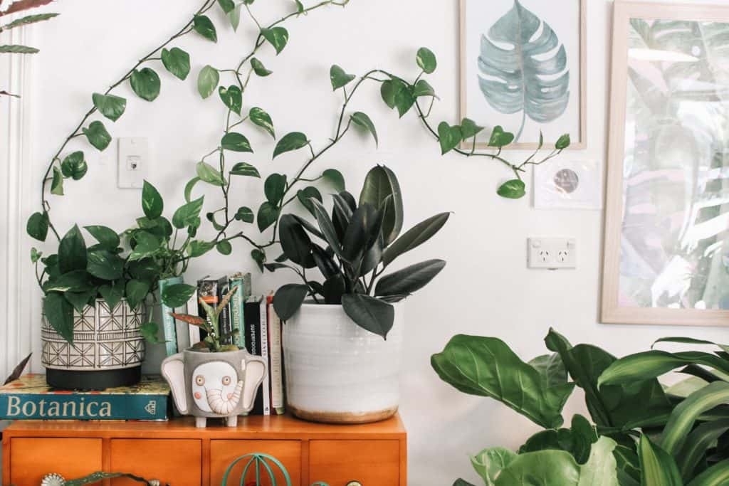 Home office: spazio al verde per un ambiente di lavoro migliore
